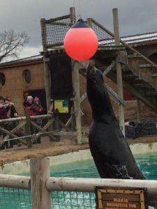 Sea Lion Show - Flamingo Land Resort