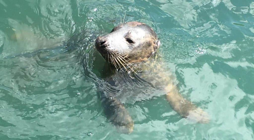 Scarborough SEA LIFE Sanctuary - Free Annual Pass