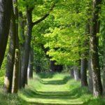 Thorp Perrow Arboretum Wildlife Park