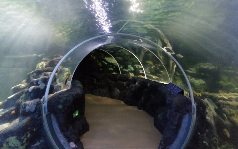 National-SEA-LIFE-Centre-Birmingham-Ocean-Tunnel