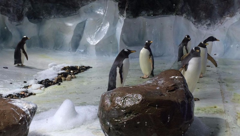National-SEA-LIFE-Centre-Birmingham-Penguin-Ice-Adventure