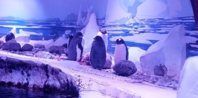 SEA-LIFE-London-Aquarium-Penguins