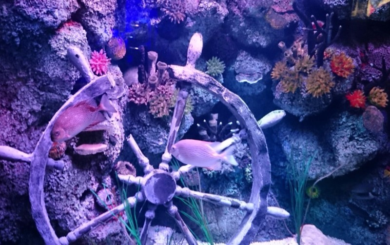 SEALIFE-Manchester-Coral-Reef