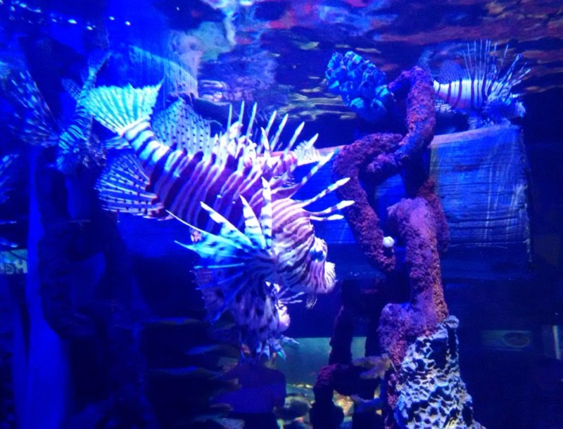 SEALIFE-Manchester-Spiky-Fish