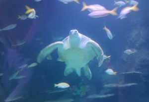 SEALIFE Manchester - Turtle