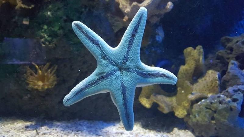 SEA-LIFE-Weymouth-Starfish