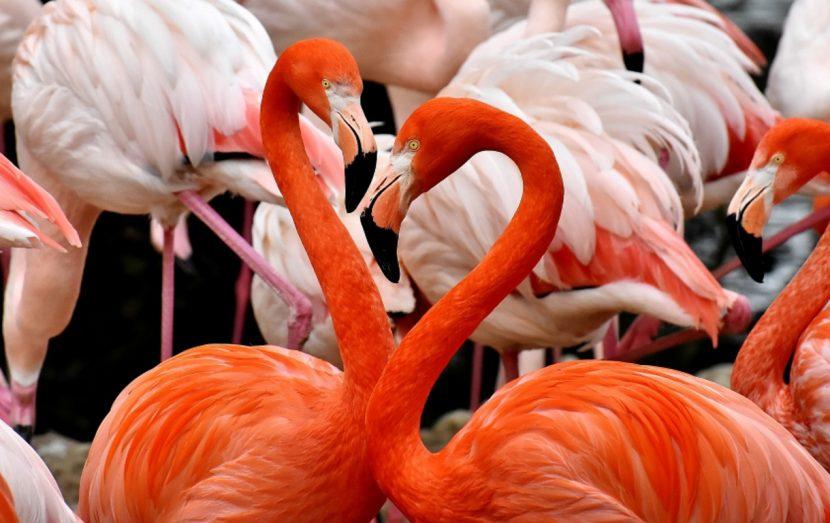 Flamingoland - Flamingos