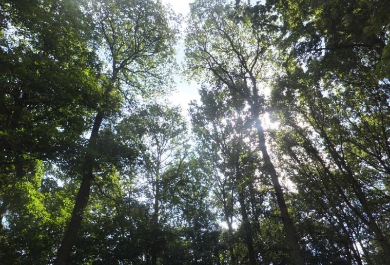 Stockeld-Park-Trees