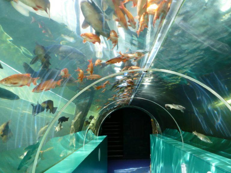 Lakes Aquarium - Attractions Near Me